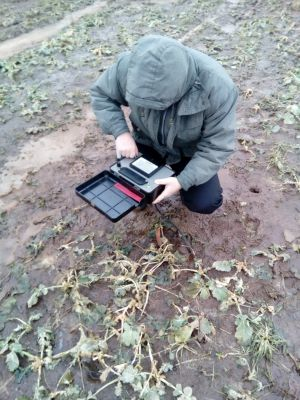 Агрометеоролог в поле