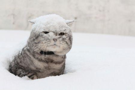 сильный мороз